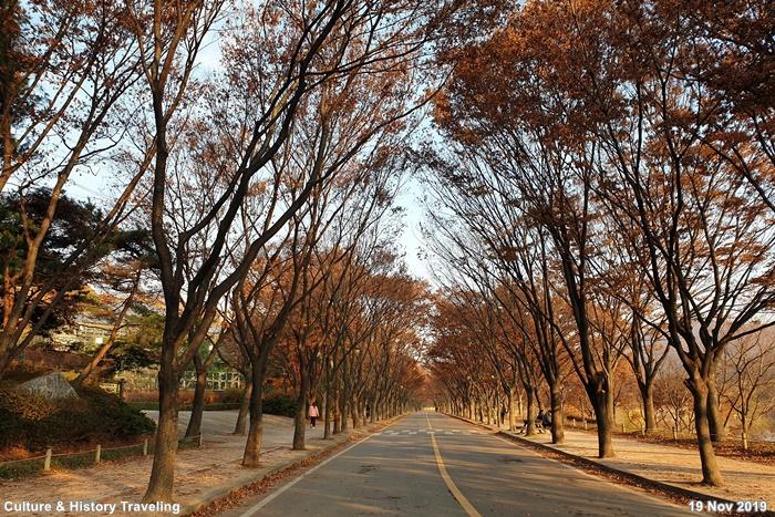 인천 인천대공원 13-20191126